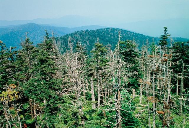 Lesy mírného pásu - Ohrožení | 640 x 436 jpeg 310kB